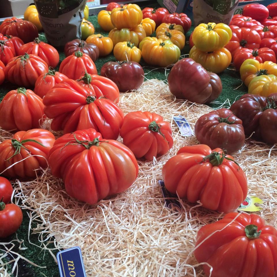 כל זן אפשרי של עגבניות בעונתן